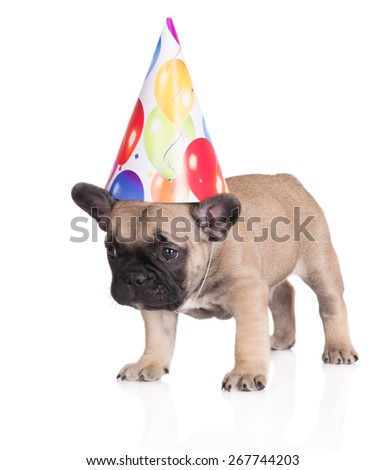 funny puppy in a birthday hat - stock photo
