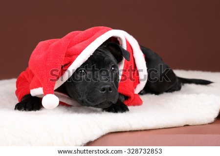 Funny puppy in a red robe - stock photo