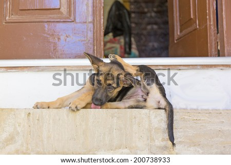 Funny puppy lies on the doorstep - stock photo