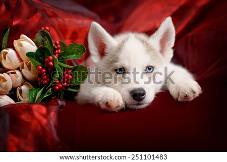 funny puppy with a bouquet of flowers wishes happy holidays - stock photo