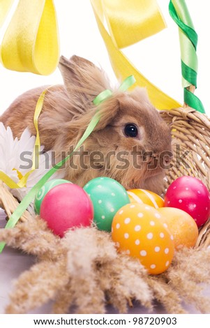Funny rabbit in basket with easter eggs - stock photo