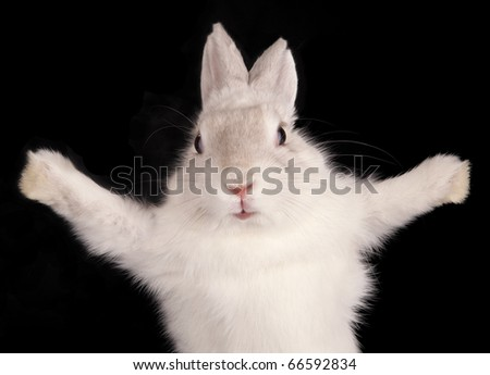 Funny rabbit with open pads on black background - stock photo