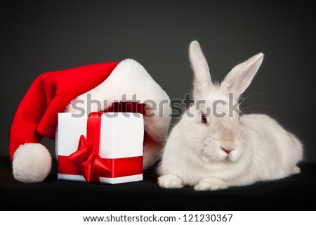 Funny rabbit with Santa hat and Christmas box over dark background - stock photo