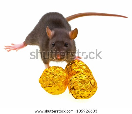 Funny rat and chocolate candies isolated on white background - stock photo