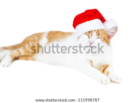 funny red and white cat in santa's hat isolated - stock photo
