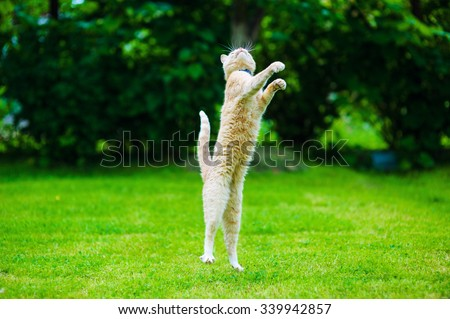 Funny red cat jumping on green grass - stock photo