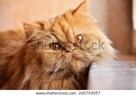 funny red cat looking out the window - stock photo