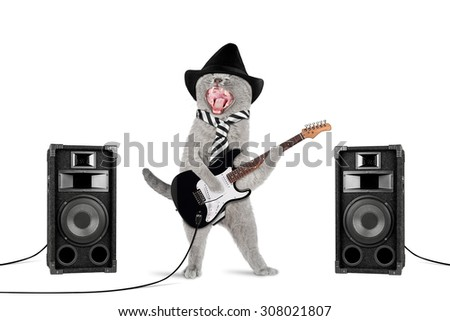 funny rock star cat with guitar and speakers on white background - stock photo
