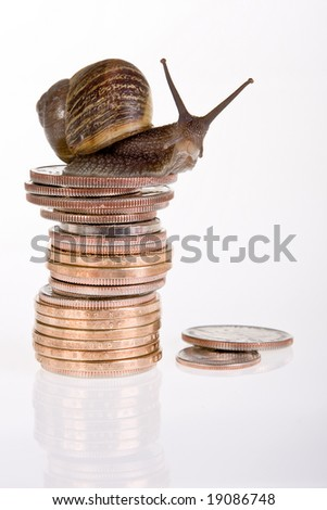 Funny snail sitting on a stack of dollar coins - stock photo