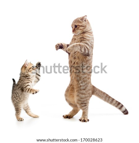 Funny standing kitten and cat - stock photo