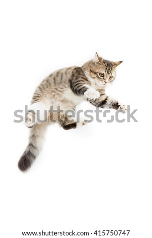 Funny tabby Persian kitten jumping on white background - stock photo