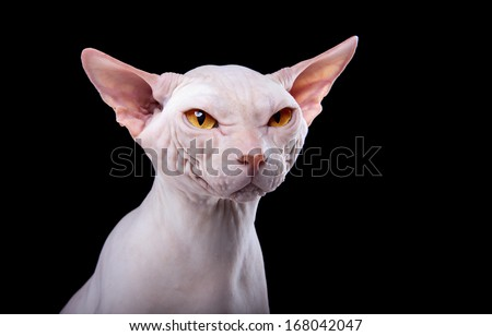Funny white cat on a black background - stock photo