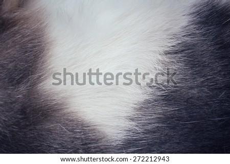 Fur cat background - stock photo