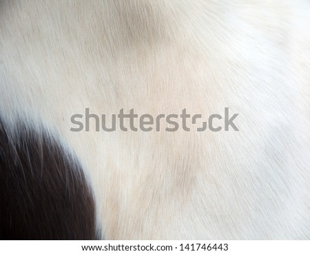 fur of mini pony/animal in the wild zoo - stock photo