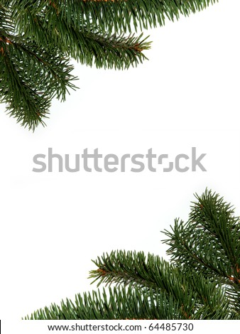 Fur-tree branch - stock photo