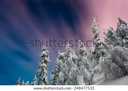 Fur trees on hill at night time with trails on sky - stock photo
