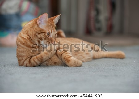 Furry Tabby cat cleaning and grooming his paws. - stock photo