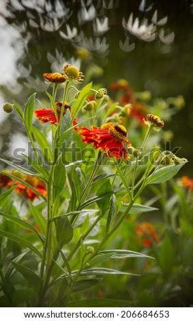 Gaillardia the blanket flowers, is a genus of perennial flowering plants in the sunflower family, Asteraceae. Closeup side view of flowering bush with artistic shaped bokeh in the background - stock photo