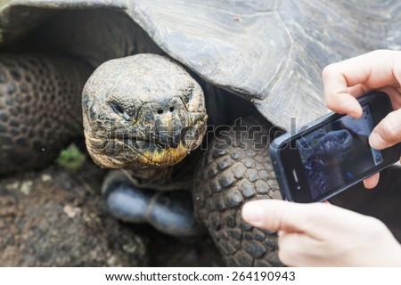 Galapagos giant tortoise on the island San Cristobal, Enchanted Islands - stock photo