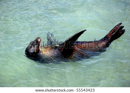 Galapagos sea lion - Floreana Island, Galapagos - stock photo