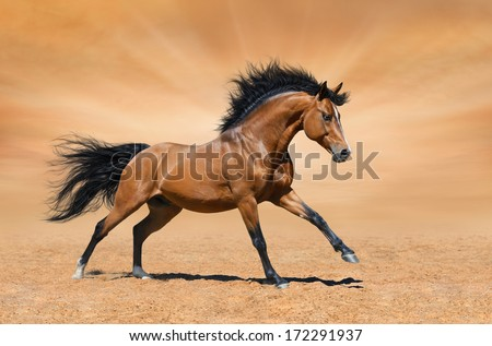 Galloping bay horse on gold background - stock photo