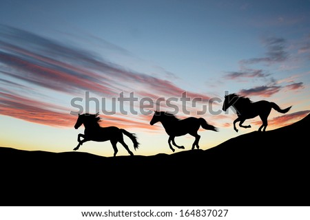 Galloping wild horses. Horse silhouette against the sky - stock photo