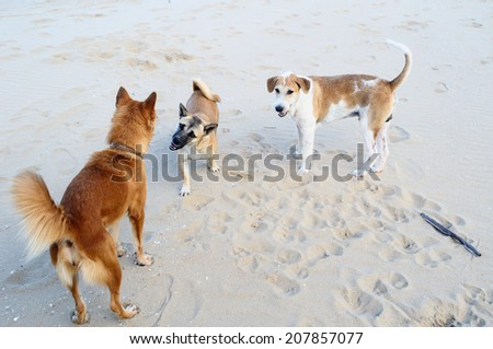 Gang of dogs on the beach / Dogs on the beach - stock photo