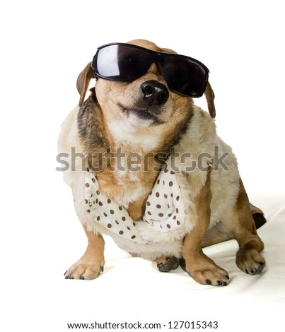 gangsta rapper dog - stock photo