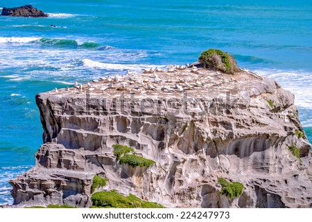 Gannet habitat at Muriwai, Auckland, New Zealand - stock photo