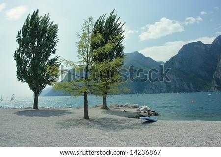 Garda lake shore with surfing board and three beautiful trees - stock photo
