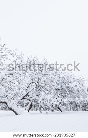 Garden and apple trees covered in snow - stock photo