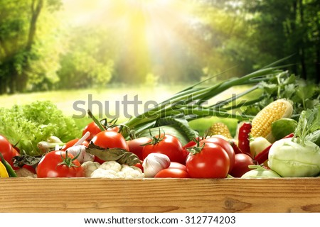 garden and vegetables  - stock photo