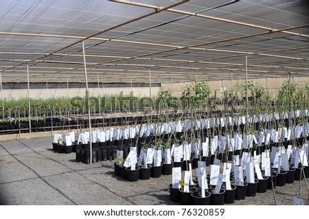 Garden center - stock photo