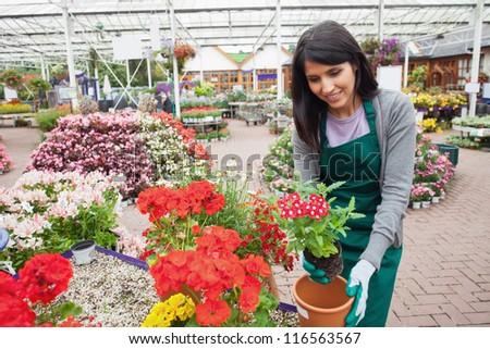 Garden center employee planting a flower in a flower pot in the garden centre - stock photo