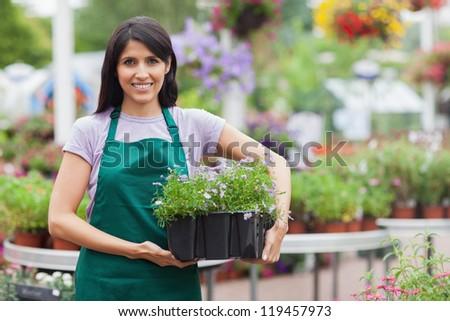 Garden center worker carrying box of flowers in garden center - stock photo