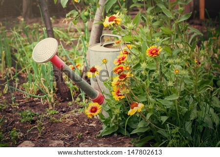 Garden composition with a bush of flowers and a watering can - stock photo