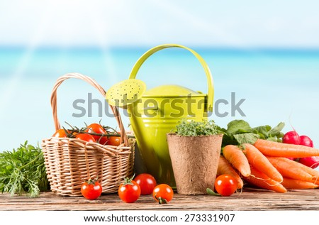 Garden concept, fresh vegetables on wooden table, watering can, seeds, plants - stock photo