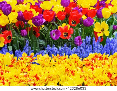 Garden detail, colorful background - stock photo