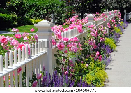 Garden fence with pink roses, sage, speedwell and catmint - stock photo