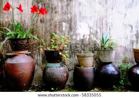 Garden flowerpots and plants on a terrace - stock photo