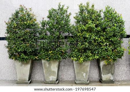 Garden flowers in flowerpots outdoor - stock photo