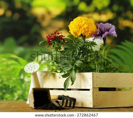 garden flowers, tools (rake, shovel, watering can) on natural green background - stock photo