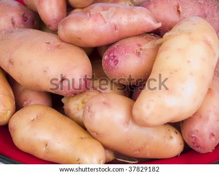 Garden fresh rose fingerling potatoes on a red plate - stock photo
