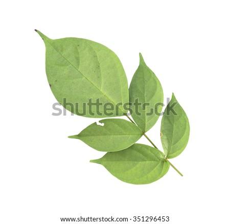 garden leaves on white background - stock photo