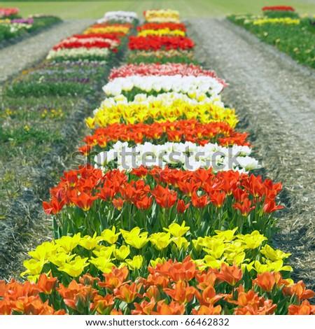 garden, Netherlands - stock photo