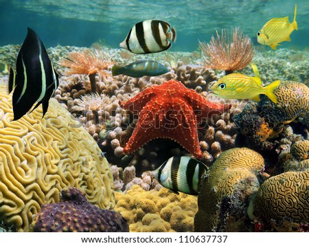 Garden of corals under water surface with a starfish and colorful tropical fish - stock photo