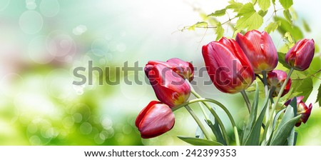 Garden red tulips.Spring Time background - stock photo