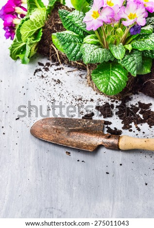Garden scoop and flowers blooming plant with soil and root - stock photo