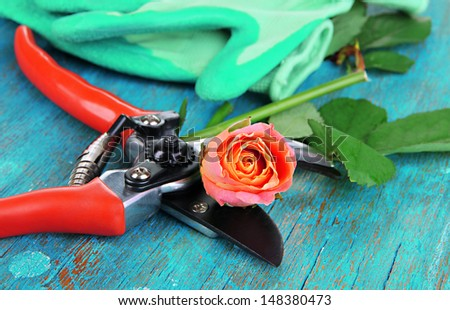 Garden secateurs and rose on wooden table close-up - stock photo