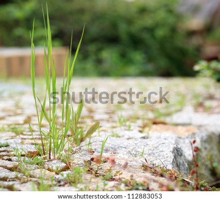 Garden stone path with grass macro, close-up - stock photo